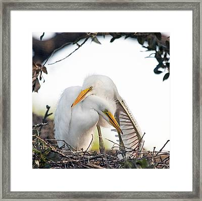 Affectionate Chicks Framed Print by Kenneth Albin