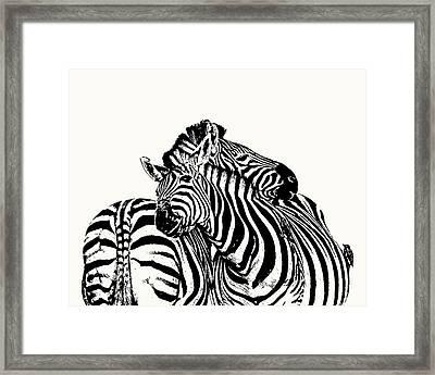 Affectionate Zebra Pair Framed Print