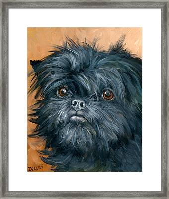 Affenpinscher Portrait Framed Print by Dottie Dracos