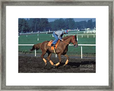 Affirmed - Triple Crown Winner Framed Print
