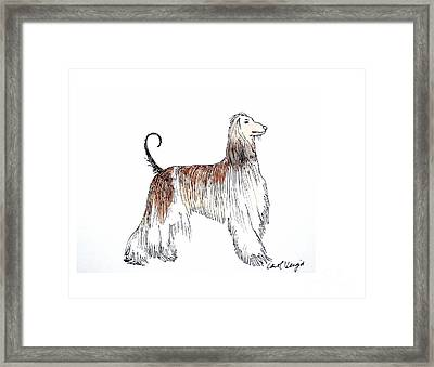 Afghan Hound Framed Print by Carol Veiga