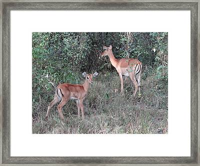 Africa - Animals In The Wild 2 Framed Print