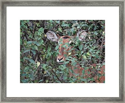 Africa - Animals In The Wild 4 Framed Print