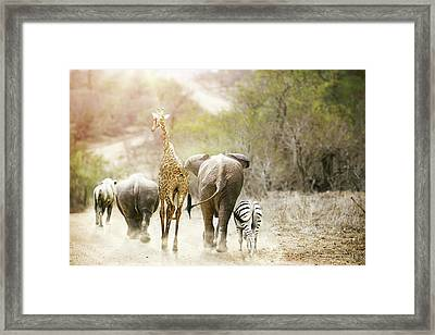 Africa Safari Animals Walking Down Path Framed Print by Susan Schmitz