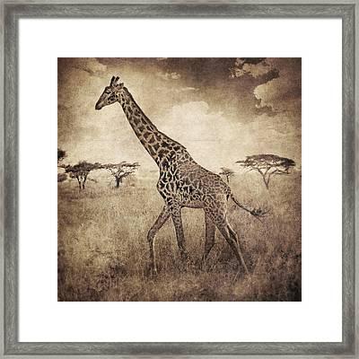 Africa Series - Giraffe Framed Print by Brett Pfister