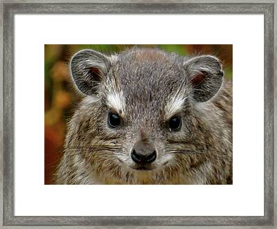 African Animals On Safari - A Child's View 6 Framed Print