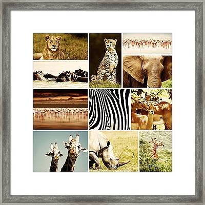 African Animals Safari Collage  Framed Print by Anna Om