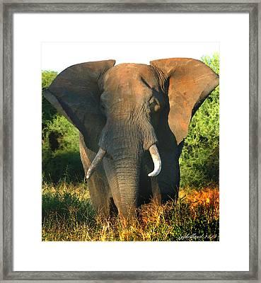 African Bull Elephant Framed Print