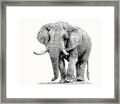 African Bull Elephant With Fine Tusks Framed Print