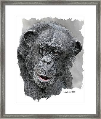 African Chimpanzee Framed Print
