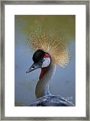 African Crown Framed Print by Skip Willits