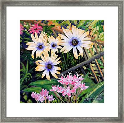 African Daisies And Pentas Framed Print