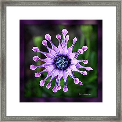 African Daisy - Hdr Framed Print