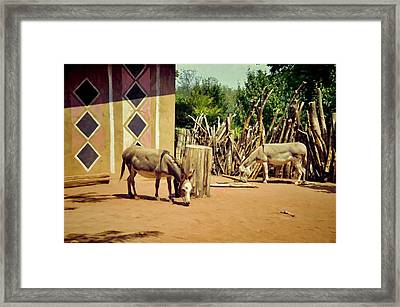 African Donkeys Framed Print by Jan Amiss Photography