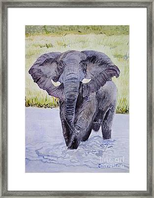 African Elephant Crossing The Chobe River Framed Print by Samanvitha Rao
