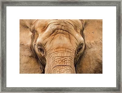 African Elephant Framed Print by Don Johnson