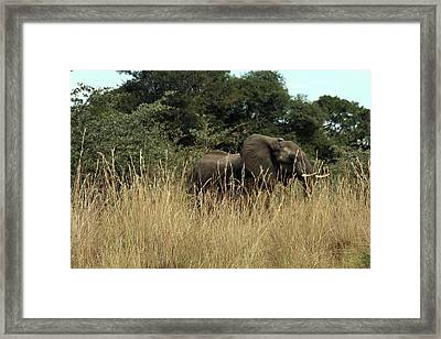 African Elephant In Tall Grass Framed Print