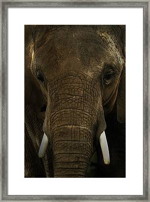 Framed Print featuring the photograph African Elephant by Michael Cummings