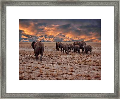 African Elephants Framed Print by Anthony Dezenzio