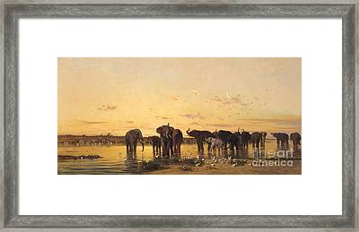 African Elephants Framed Print by Charles Emile de Tournemine