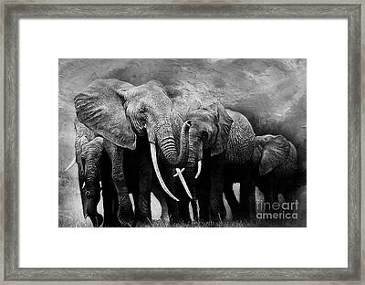 African Elephants Group  Framed Print