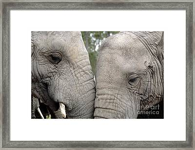 African Elephants Framed Print by Neil Overy