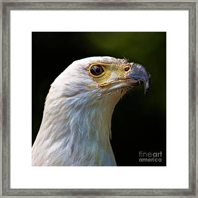 African Fish Eagle Framed Print by Joerg Lingnau