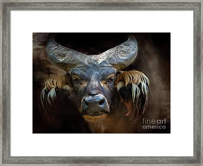 African Forest Buffalo Framed Print