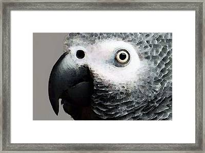 African Gray Parrot Art - Softy Framed Print by Sharon Cummings