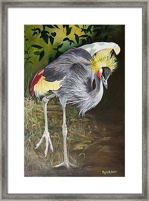 African Grey-crowned Crane Framed Print by Phyllis Beiser