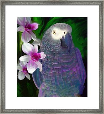 African Grey  Framed Print by Julianne  Ososke