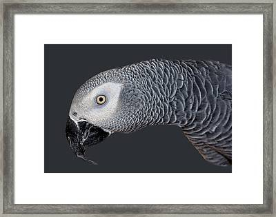 African Grey Parrot Framed Print by Donna Proctor