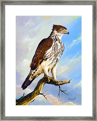 African Hawk Eagle Framed Print
