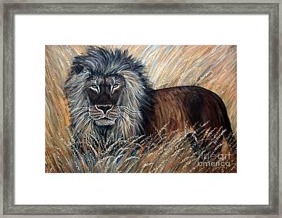 African Lion 2 Framed Print