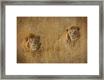 Framed Print featuring the tapestry - textile African Lion Brothers by Kathy Adams Clark