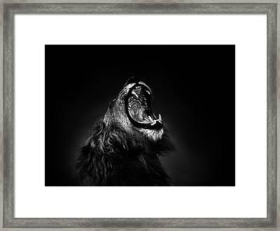 African Lion Male Yawning Showing Fierce Canine Teeth Framed Print