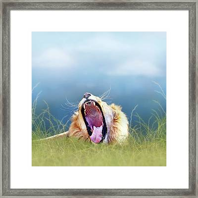 African Lion Yawning In Tall Grass Framed Print by Susan Schmitz