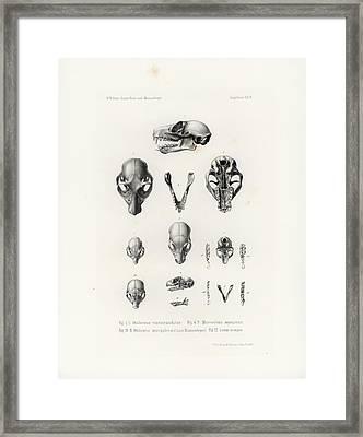 African Mammal Skulls Framed Print