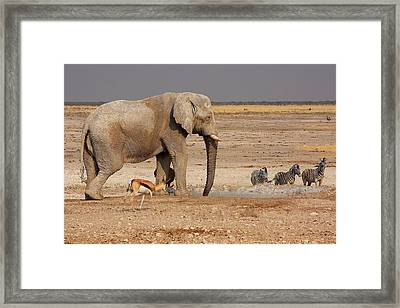 African Menagerie Framed Print by Stacie Gary