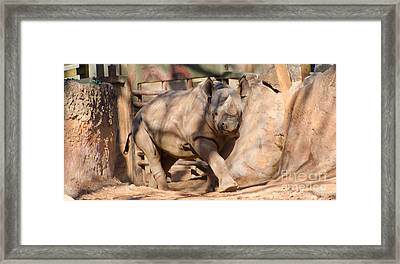 African Rhino Framed Print by Donna Brown