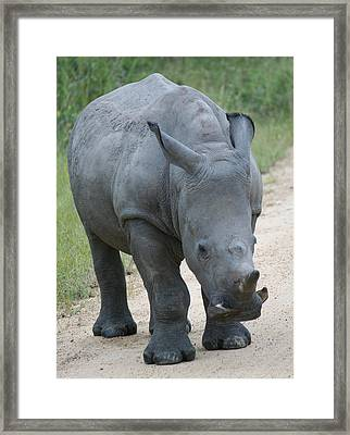 African Rhino Framed Print