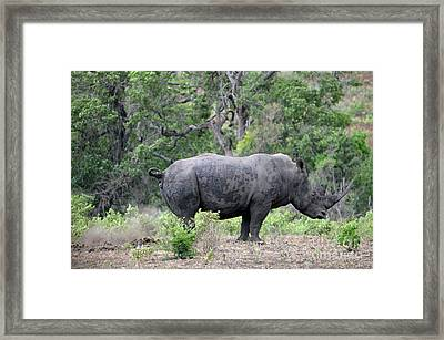 African Safari Naughty Rhino Framed Print