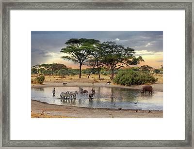 African Safari Wildlife At The Waterhole Framed Print