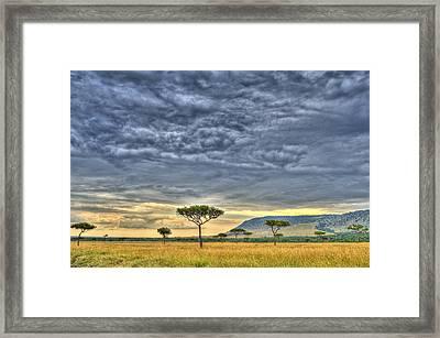 African Savanna Framed Print by Babur Yakar
