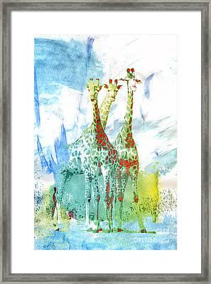 African Trio Framed Print by Jutta Maria Pusl