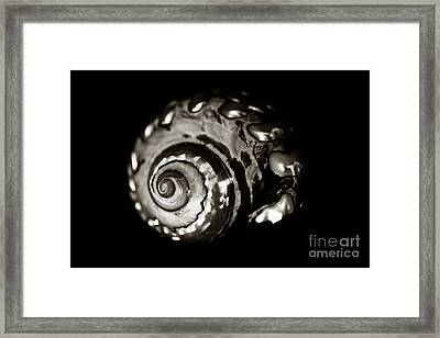 African Turbo Shell - Sepia Tone Framed Print by Charmian Vistaunet