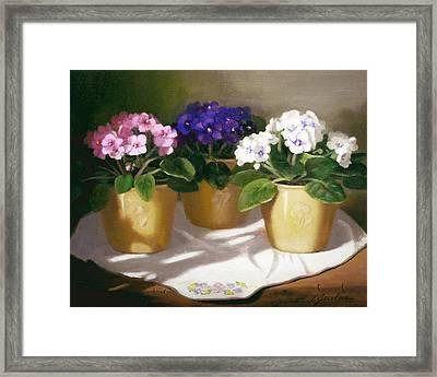 African Violets Framed Print by Linda Jacobus