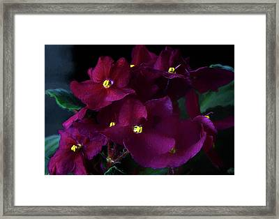 Framed Print featuring the photograph African Violets Photo Art by Sharon Talson