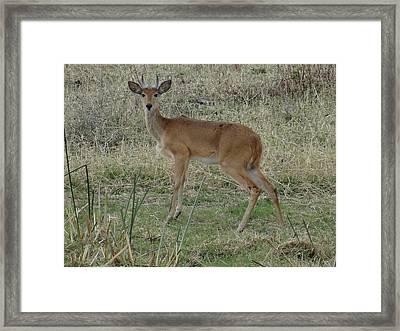 African Wildlife 1 Framed Print