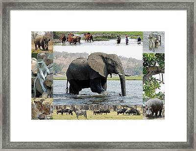 African Wildlife Montage - Elephant Framed Print by Robert Shard